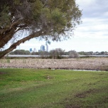 • Bayswater councillors Chris Cornish and Sonia Turkington examine targeted flora at Berringa Park Wetlands in Maylands. Photo by Jeremy Dixon