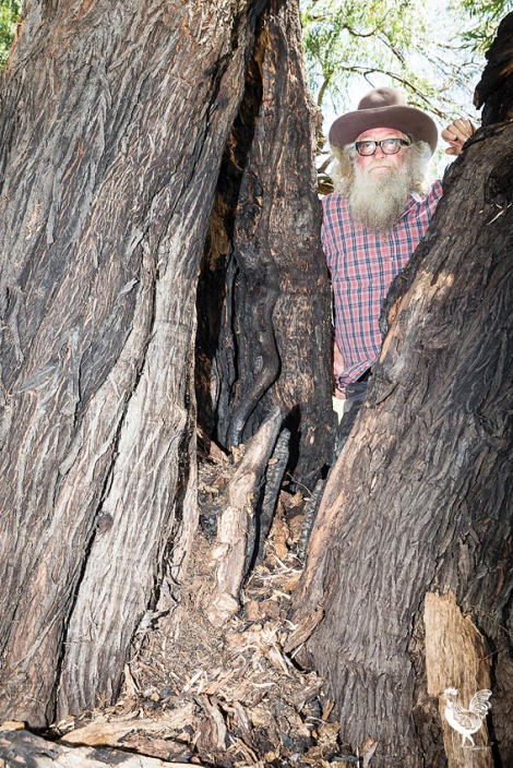 • Greg Smith says council negligence contributed to this historic tree's destruction. Photo by Jeremy Dixon