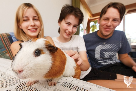 • Daniel Bagley, right, with his sister Jasmine, brother Robert and plucky Lucky the guinea pig. PhotobyMatthewDwyer