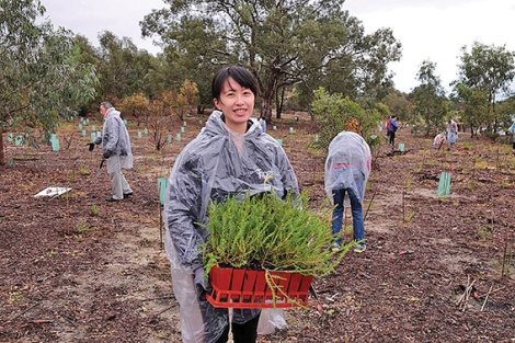 • Rain didn't keep the Buddha's Light International Association WA from planting hundreds of trees on the weekend. Photo courtesy City of Bayswater