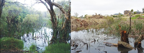 "A ""small"" section of wetland? Before and after photos by Jane Chambers."