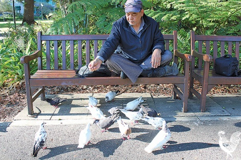 • Perth's bird man is tagging pigeons with bits of colourful plastic.