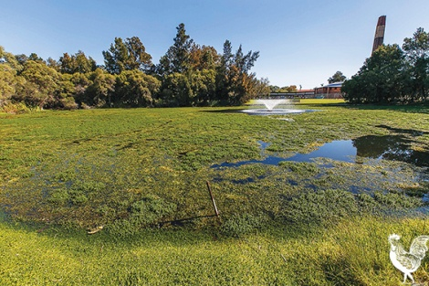 • A raft of initiatives have been suggested to combat poor water quality at Maylands' lakes, but getting residents to ease up on fertilisers remains a major obstacle.