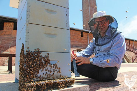 • Apiarist Dean Woods with the new bee hive at the Maylands Brickworks. Photo by Steve Grant